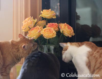 Everyone sniffs the flowers - 2013 © Colehaus Cats