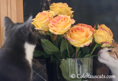 Really sniffing the flowers - 2013 © Colehaus Cats