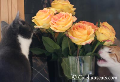 More than just sniffing the flowers - 2013 © Colehaus Cats