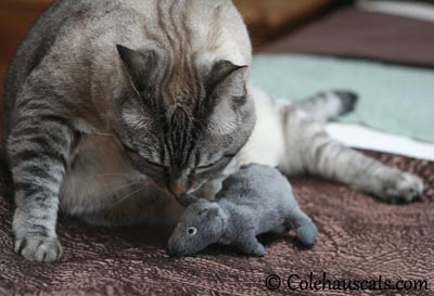 Maxx and his second favorite toy. 2013 © Colehaus Cats