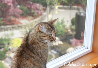 Ruby's Morning View - 2013 © Colehaus Cats