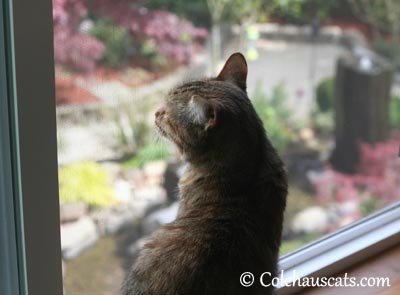 Ah, those window whiffies - 2013 © Colehaus Cats