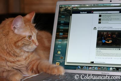 Facebook Savvy Pia - 2013 © Colehaus Cats