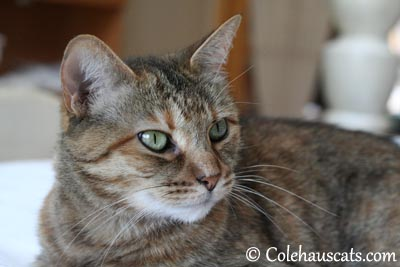 Ruby Roo Green Eyes - 2013 © Colehaus Cats