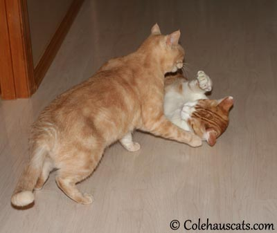 Come get my belly! - 2013 © Colehaus Cats