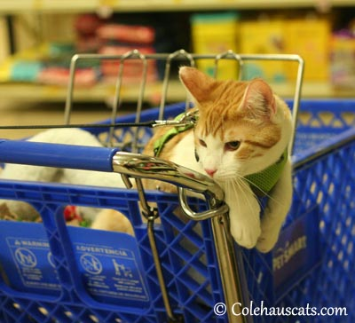 Hanging out at PetSmart - 2013 © Colehaus Cats