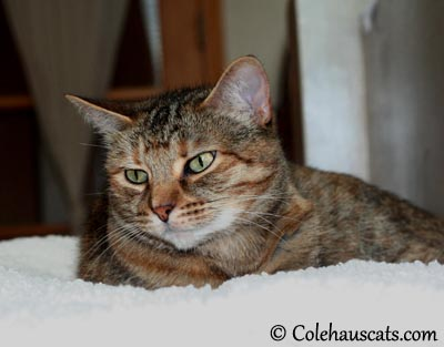 Ruby Ponders the Other Room - 2013 © Colehaus Cats