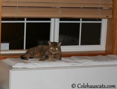 . . . 2 . . .  2013 © Colehaus Cats