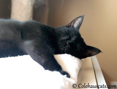 Shhhh - 2013 © Colehaus Cats