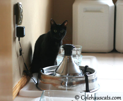 Olivia's Water Fountain - 2013 © Colehaus Cats