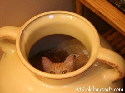 Peek-a-boo! - 2013 © Colehaus Cats