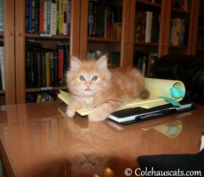 More outward tongue with Bonus tongue reflection! - 2012 © Colehaus Cats