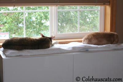 Sharing beds. Again? - 2013 © Colehaus Cats