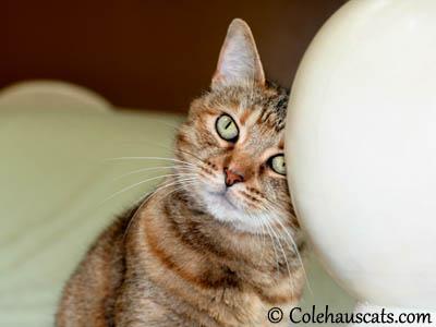 It's me, Ruby! - 2013 © Colehaus Cats