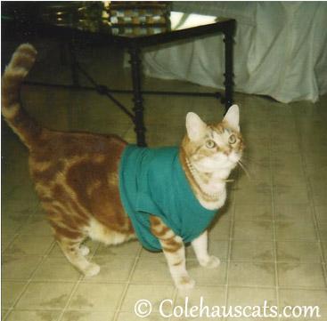 Arie, circa 1997 - © Colehaus Cats