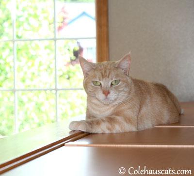 Purr-fectly fine - 2013 © Colehaus Cats