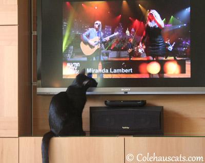 Olivia likes TV - 2013 © Colehaus Cats