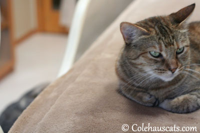 Over my shoulder, there it is - 2013 © Colehaus Cats