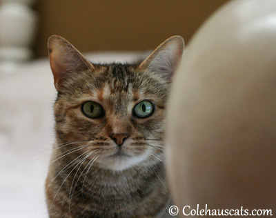 Ruby - 2013 © Colehaus Cats