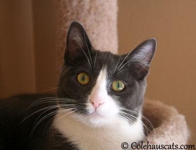 Happy now? - 2013 © Colehaus Cats