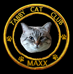 Maxx - Tabby Cat Club member 82!