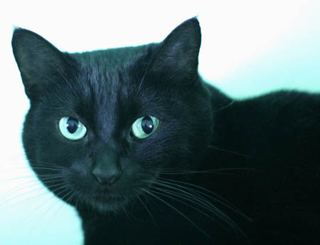 Daisy longs for a very quiet home where she can be her own cat.