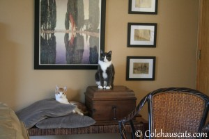 Quint and Tessa - 2013 © Colehaus Cats