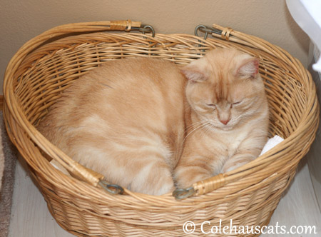 There should be a National Cat in a Basket Day, says Miss Newton - 2013 © Colehaus Cats