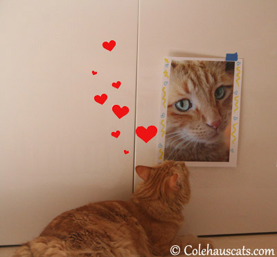 Pia loves Dexter - 2013 © Colehaus Cats