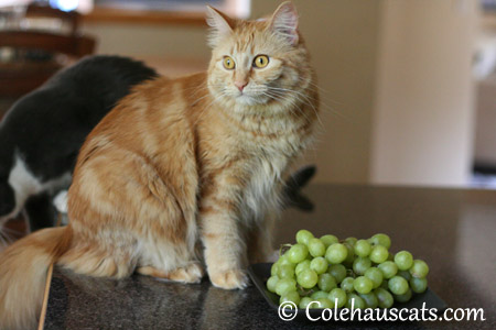 Because green goes with ginger - 2013 © Colehaus Cats