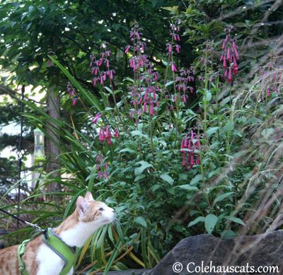 Loves Purple Flowers - 2013 © Colehaus Cats