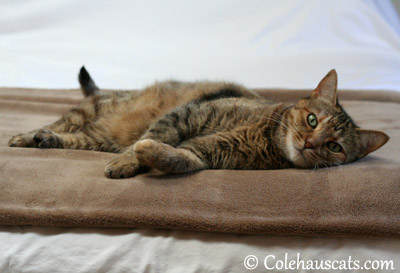 Ruby says Life's Good - 2013 © Colehaus Cats