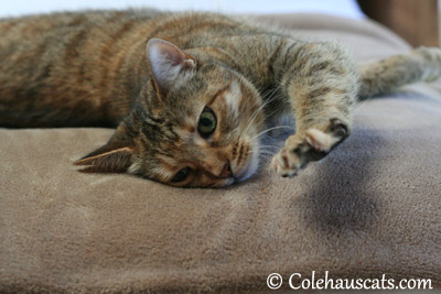 Ruby Yoga Position 2 - 2013 © Colehaus Cats