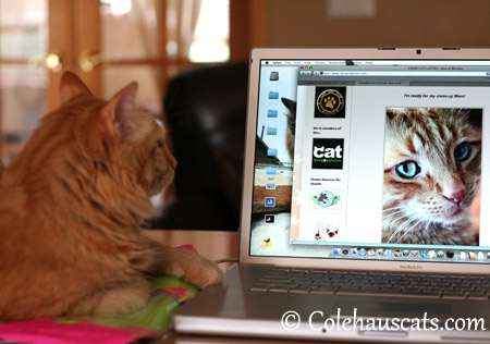 Pia still loves Dexter - 2013 © Colehaus Cats