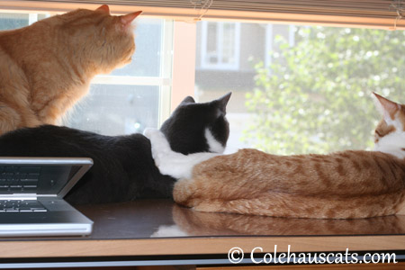 Two months into summer vacation - 2013 © Colehaus Cats
