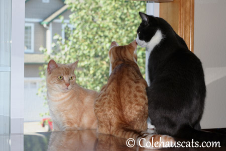 Eightieth day of summer vacation - 2013 © Colehaus Cats