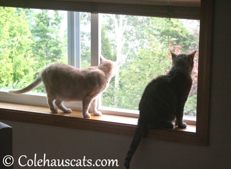 Miss Newton and Ruby. Progress! - 2013 © Colehaus Cats