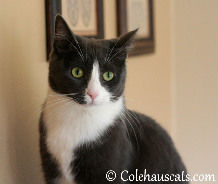 What's that noise? - 2013 © Colehaus Cats