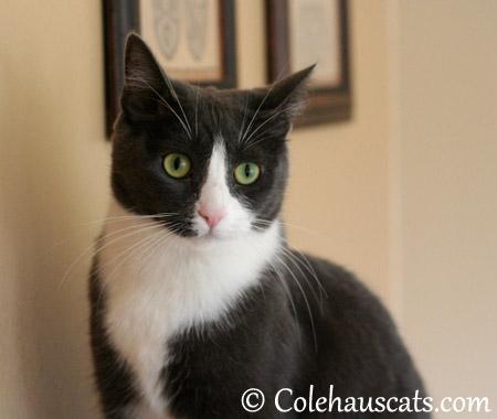 What's that noise? - 2013 © Colehaus Cats