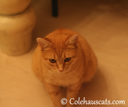 I couldn't hide if I wanted to - 2013 © Colehaus Cats