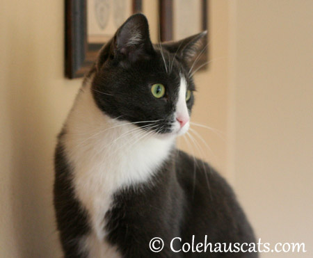 There's someone at the door! - 2013 © Colehaus Cats