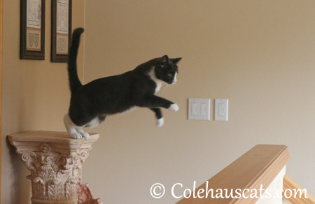 Getting down, Tessa-style - 2013 © Colehaus Cats