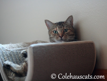 Someone's at the door? - 2013 © Colehaus Cats