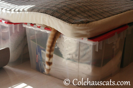 Quint says they'll never find me here - 2013 © Colehaus Cats