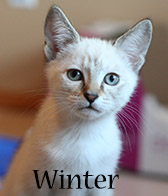 Winter, Honorary Niblet, December 2013