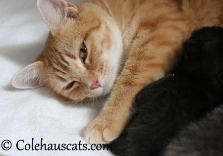 """Erinn says, """"Sign me up!"""" - 2013 © Colehaus Cats"""