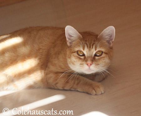Mama Erinn Zuzu - 2013 © Colehaus Cats