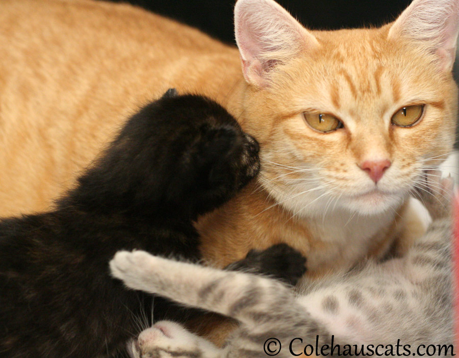 Illy kisses for mama Erinn Zuzu - 2013 © Colehaus Cats