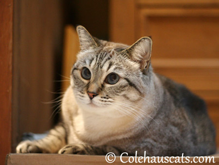 Maxx wonders - 2013 © Colehaus Cats