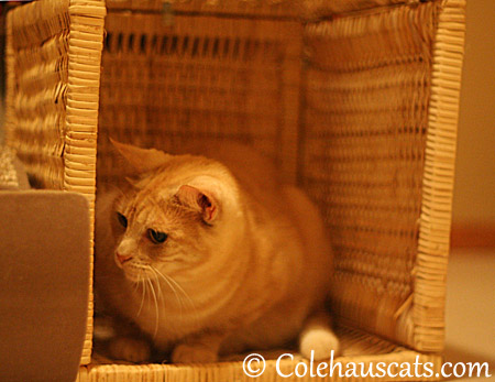 Guarding her other basket - 2013 © Colehaus Cats
